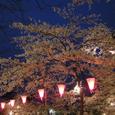 2006 高田公園 09