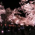 2006 高田公園 32