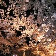 2006 高田公園 37