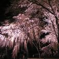 2006 高田公園 29