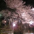 2006 高田公園 27