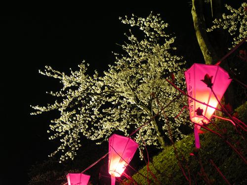 2006 高田公園 13