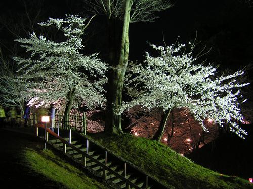 2006 高田公園 14
