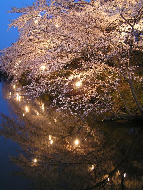 2006 高田公園 07