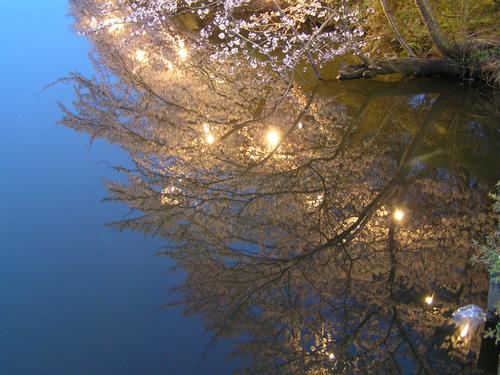 2006 高田公園 06