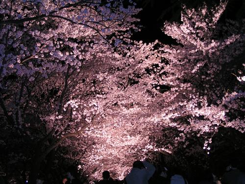 2006 高田公園 33