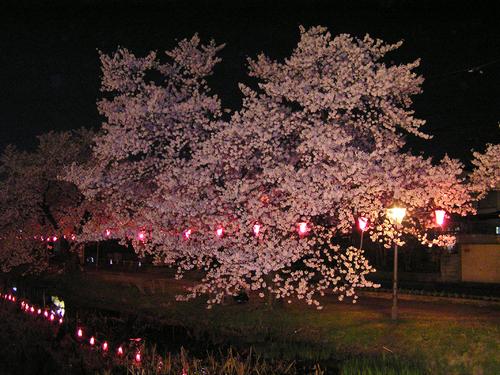 2006 高田公園 47