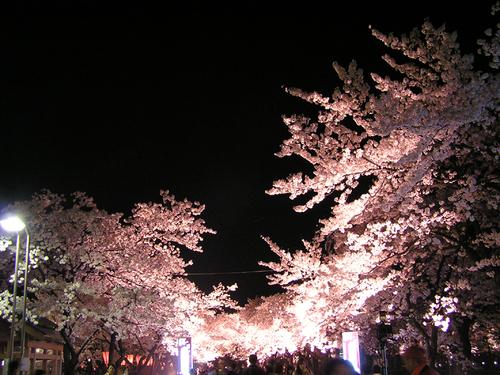 2006 高田公園 36