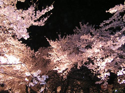 2006 高田公園 34