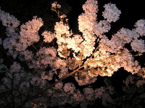 2006 高田公園 30